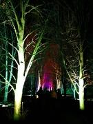30th Nov 2019 - Anglesey Abbey