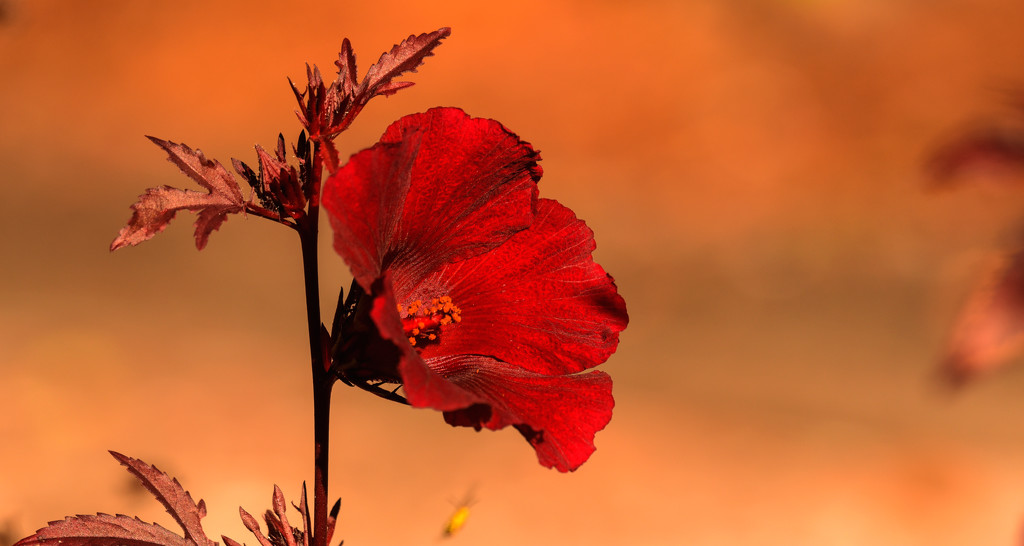 One More Red Flower! by rickster549