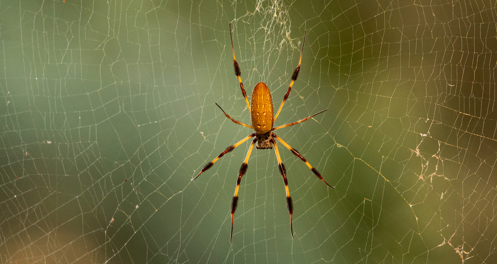 Spider in the Web! by rickster549