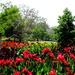 Mt Cootha Botanic Gardens