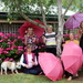 Brolly girls, pink geraniums and guests