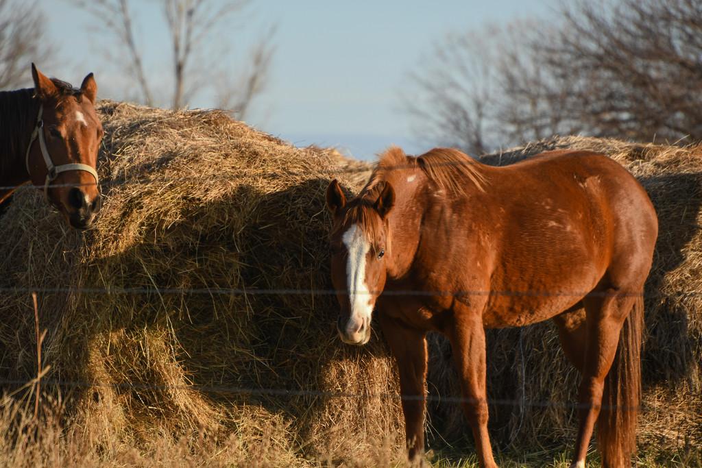 Breakfast of Hay by kareenking