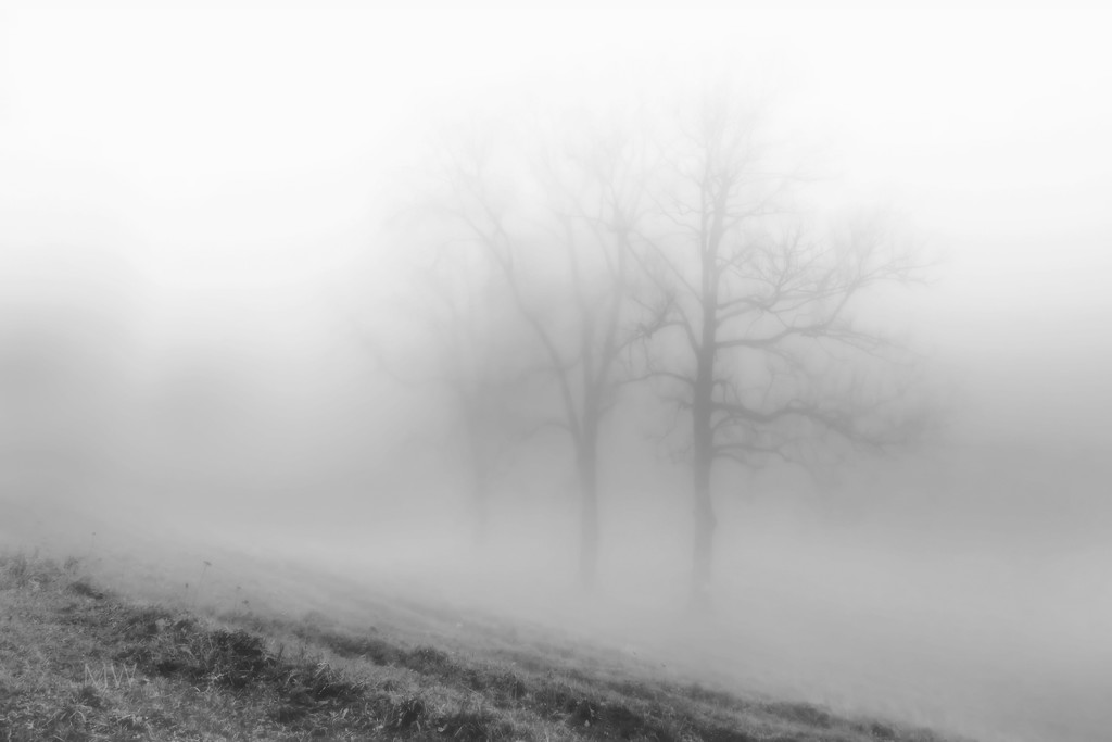 2019-12-01 a tiny little bit foggy by mona65