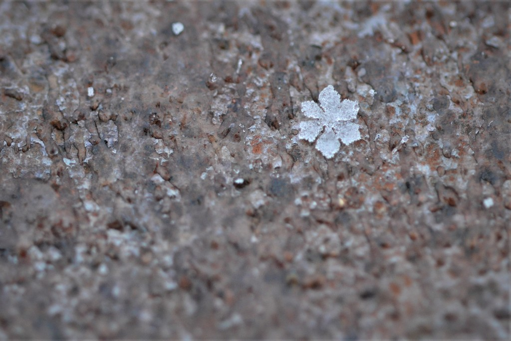 Snowflake by fayefaye
