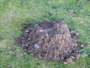 1st Dec 2019 - massive molehill