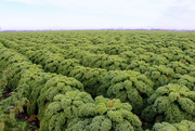 1st Dec 2019 - Kale country