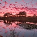 Pink polka dotted sky by ludwigsdiana