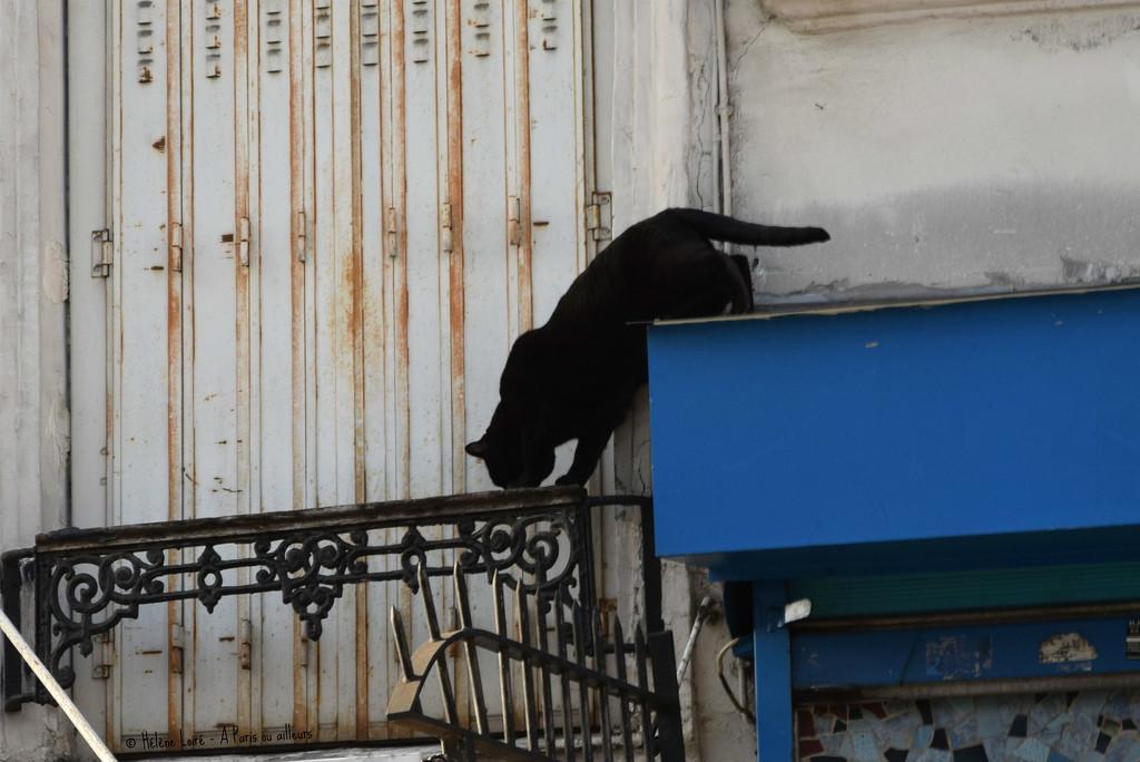 acrobat by parisouailleurs