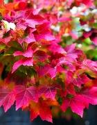 2nd Dec 2019 - Autumn Colors My Soul