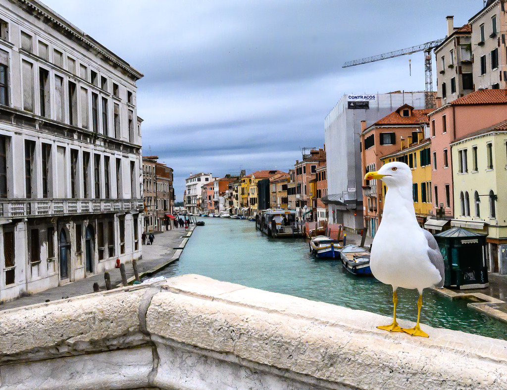 Photo bombed in Venice by dridsdale