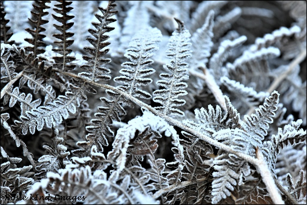 RK3_6414 Frozen leaves by rosiekind