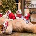 Tiny T Does Christmas