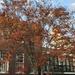 Late November Autumn tree, Charleston