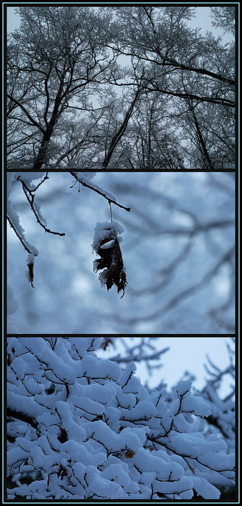 Snow on Trees by olivetreeann