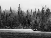1st Dec 2019 - trees along peck lake trail