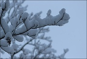2nd Dec 2019 - Snow