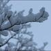 Snow by olivetreeann