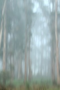 2nd Nov 2019 - spring mist