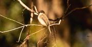 2nd Dec 2019 - Unknown Bird!