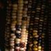 Indian Corn at night
