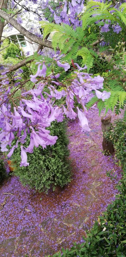 Purple carpet by julianneovie