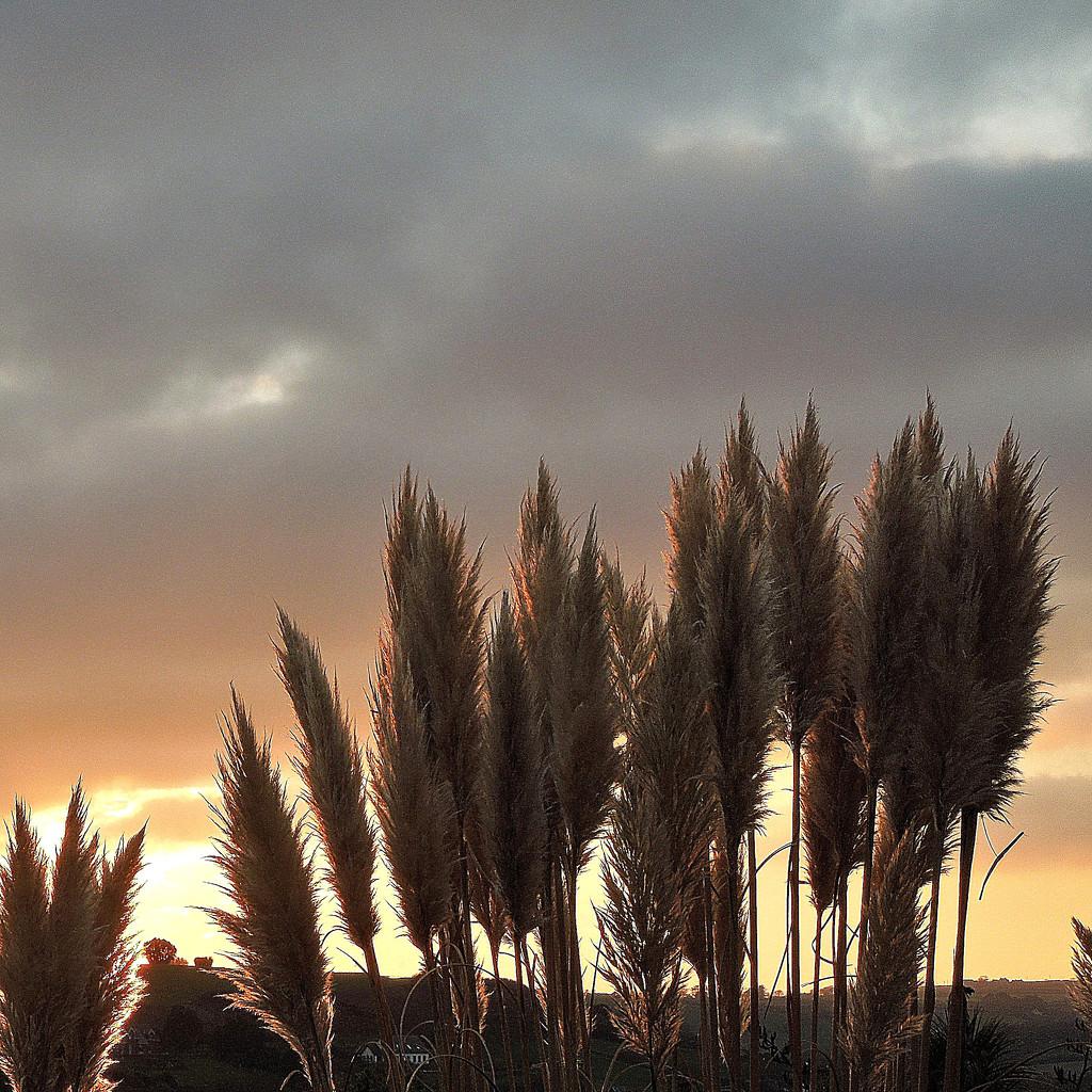 Sunset contre-jour (1) by etienne