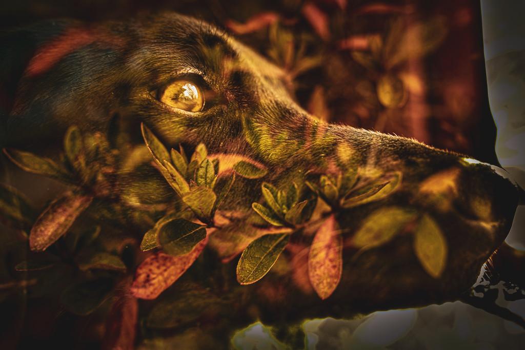 Autumnal Riley by mamazuzi