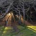God Rays Light the Picnic by jgpittenger