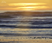 3rd Dec 2019 - Sanderlings in the Sunset