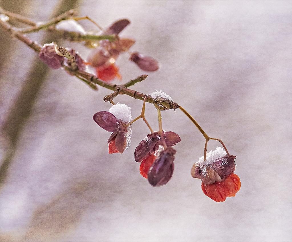 A Little Snow by gardencat