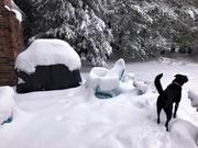 3rd Dec 2019 - first snow