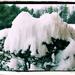 Y10 M12 D337 Snow Cap