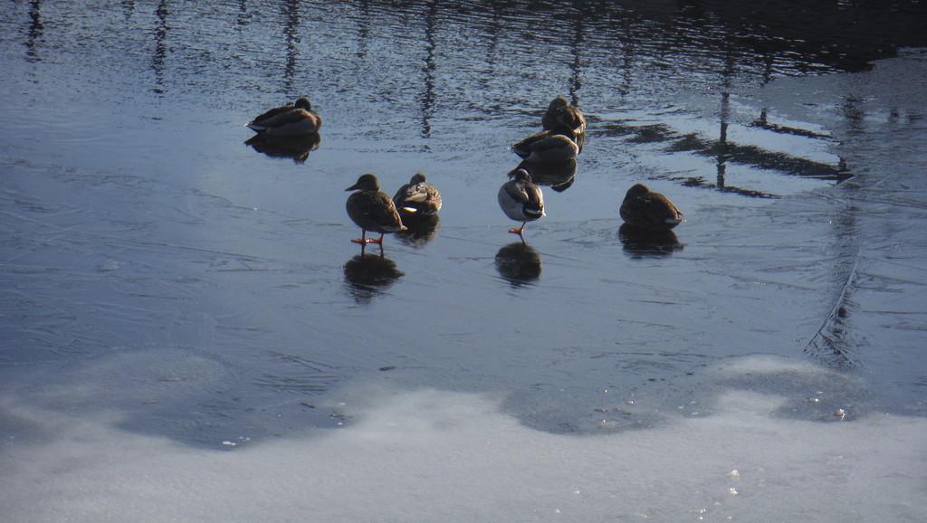 Brr! Life + Reflection on Frozen River by spanishliz