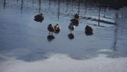 3rd Dec 2019 - Brr! Life + Reflection on Frozen River