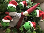 4th Dec 2019 - Pixie makes friends with some festive sprouts!