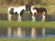 4th Dec 2019 - Horses