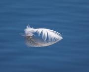 4th Dec 2019 - LHG_0467 egrets Feather