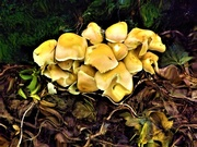 1st Dec 2019 - Funky Fungi