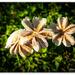 Fungi Flowers...