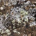 Like a little lichen hmm ladies?