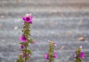 23rd Nov 2019 - Wildflowers