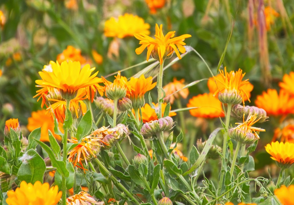 Roadside weeds by kiwinanna