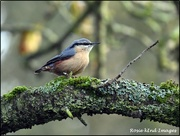 5th Dec 2019 - RK3_6716  Today's nuthatch