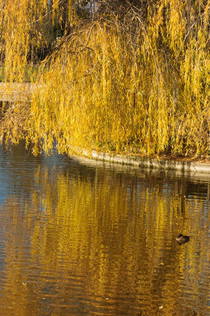 Golden reflections by rumpelstiltskin