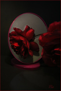 5th Dec 2019 - A rose and a mirror (Best on black)