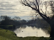 6th Dec 2019 - Beside the River Ouse