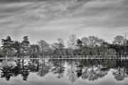 6th Dec 2019 - Fishing Lake Reflections