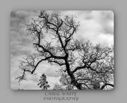 7th Dec 2019 - Bare Branches