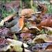 RK3_6715  In the leaves