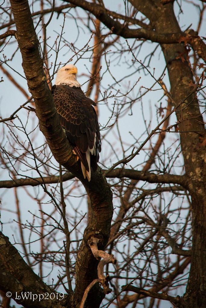 I Spy With My Eagle Eye by lesip
